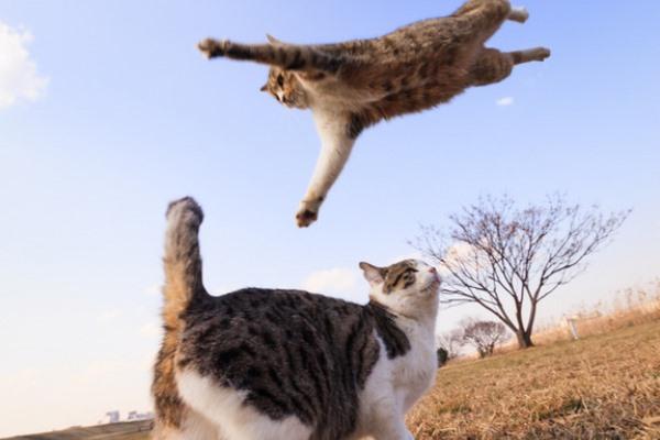 ネコが解説する分かりやすいプロレス技