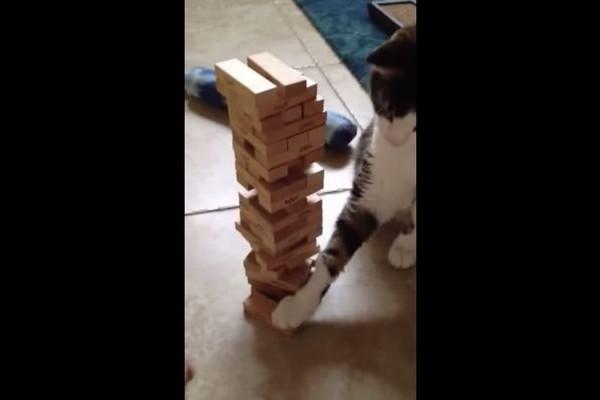 猫とジェンガを勝負してみたら驚くほど強かった!