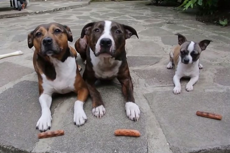 3匹仲良く食べると思いきや…2匹「ぽか~ん」