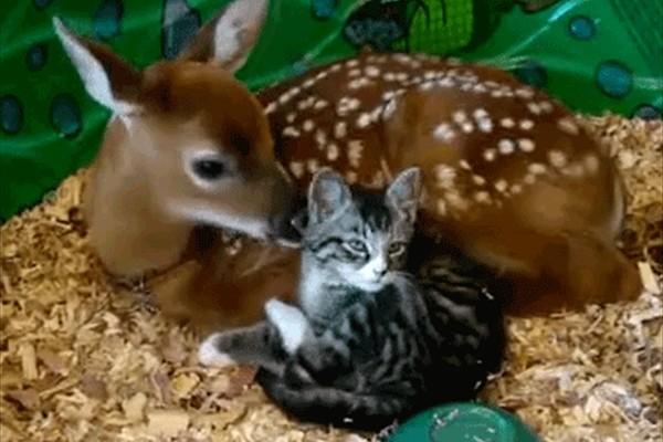 【禁断の愛】動物たちの種を超えた愛情表現(GIFアニメ)