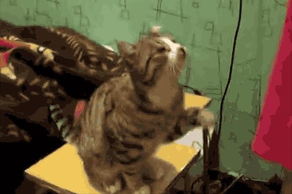 「ねぇねぇ、ここ撫でてよー」と要求して満足げなネコがかわいすぎる(GIFアニメ)