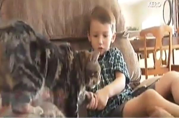 少年「うちの猫は僕のヒーローさ!」犬から守った猫がカッコ良すぎ!