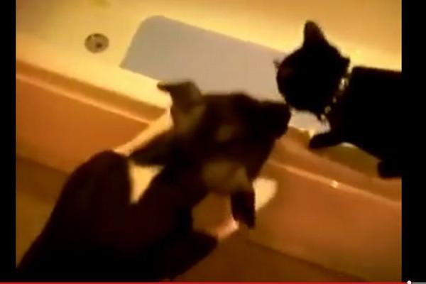 【面白動画】ワンコ「ちょっとお前見てこいよ」ネコ「何をするニャ~!!」