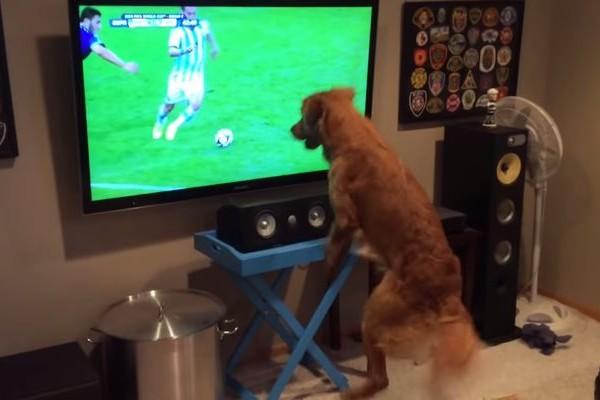 W杯サッカーにワンコも大興奮!一方もう1匹のワンコは・・・