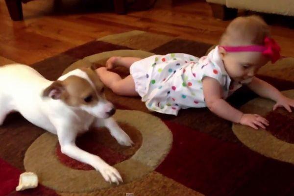 ワンコ「見て見て!ハイハイはこうするんだよ」赤ちゃんにハイハイを教える姿がかわいい