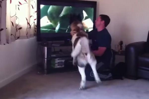 【動画】テレビ画面の熊に闘争本能をむき出しにする秋田犬が勇敢すぎる