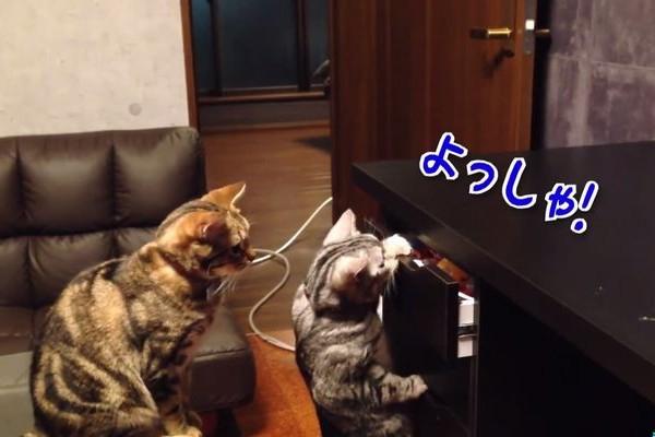 【おもしろ動画】やっとの思いでおやつの入っている引き出しを開けたネコに思いもよらないオチが!