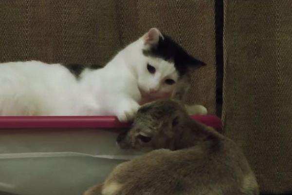 """赤ちゃんヒツジを""""ペチペチ""""と撫でる猫が可愛らしい"""