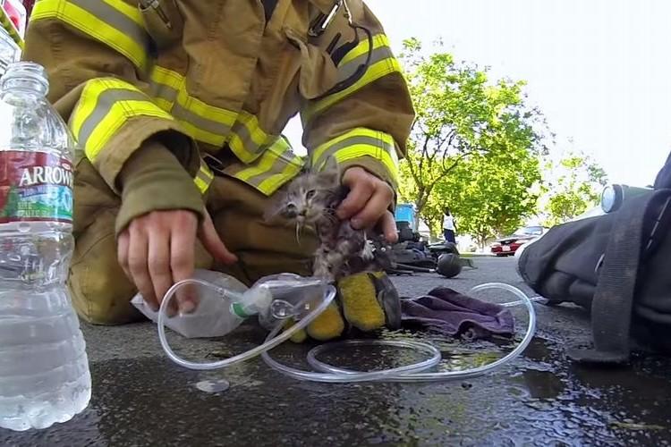 【完全ドキュメント】消防士が煙の充満する家屋から意識不明の子猫を救った映像