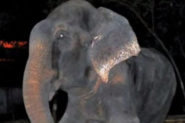 50年間虐待され続けてきたゾウが救出された救出された時に流した涙