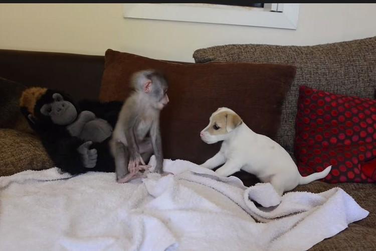 【動画】犬猿の仲は嘘だった!?仲良しのサルとワンコがかわいい