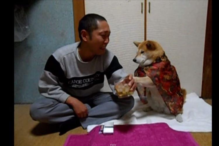芸達者な柴犬マリちゃんがご主人様のコントに渋々付き合う映像5本