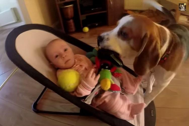 赤ちゃんのおもちゃを奪ってしまったワンコが「ごめんね。コレで許してね」とおもちゃを倍返し
