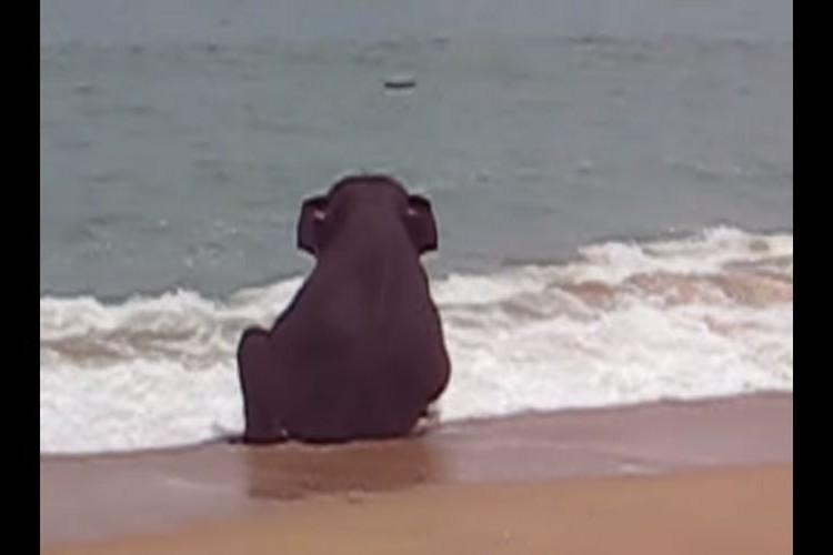 浜辺でひとり座り込む小ゾウを発見!よく見たらゾウが一人遊びしていた