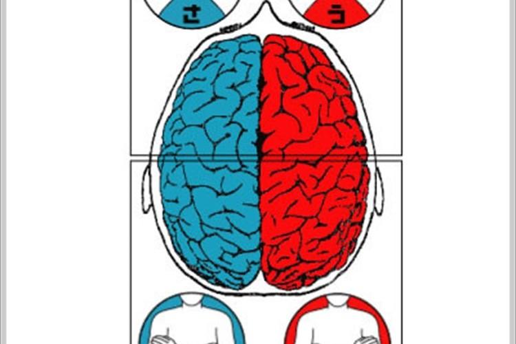 あなたは理論派?直感派?30秒のテストで4つのタイプに分ける効き脳テスト