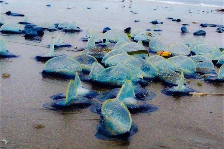 サンフランシスコの海岸に謎の青い物体が漂流し地元で大きな話題に