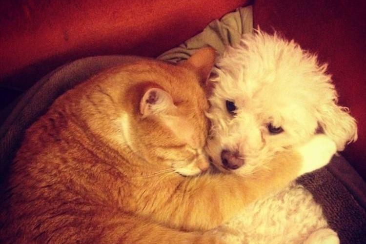 【癒し画像】いつも一緒の犬と猫のナイスカップルな写真20選