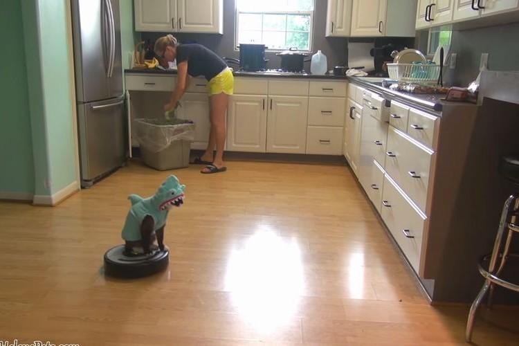 ルンバに乗ってキッチンを徘徊するネコの映像がシュール