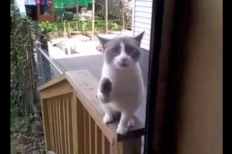 【動画】ドアの向こうで必死に何かを訴えかける野良ネコ。ただ何なのかは一切分からない。