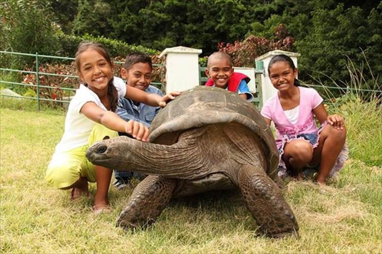世界最古の生物ゾウガメのジョナサン(182歳)は誰からも愛される島のアイドル