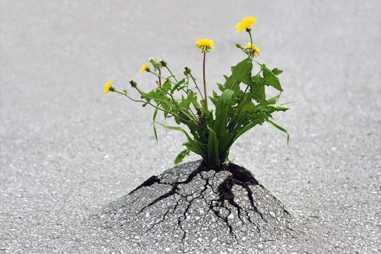 コンクリートに咲く一輪の花、決して諦めない生命力溢れる植物たち25選