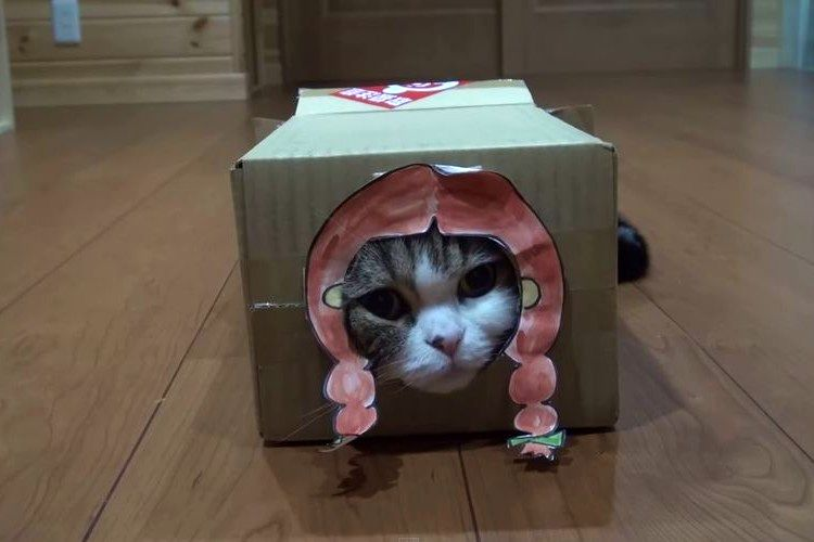 「ニャンとしてでも入りたい」いろんな箱に入っちゃう猫が可愛すぎると話題に