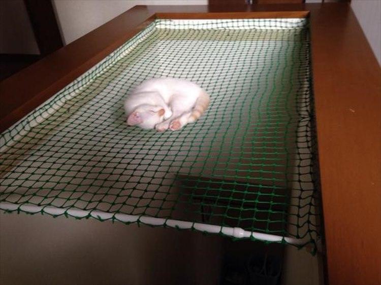うちの猫が落ちないように落下防止用ネットを取り付けた結果…