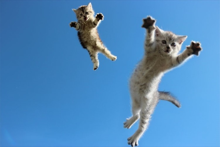 「ジャンプが大好きだにゃ~」躍動感が半端ないネコの写真19選