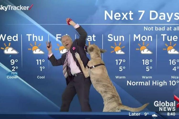 【放送事故】ワンコと一緒に天気予報をお届けした映像がもはやコント