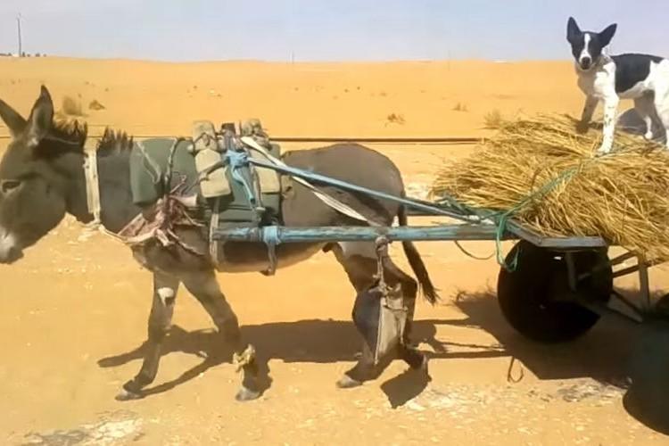 【まさか】ロバと犬が砂漠で奇妙なふたり旅をしていた場面に遭遇