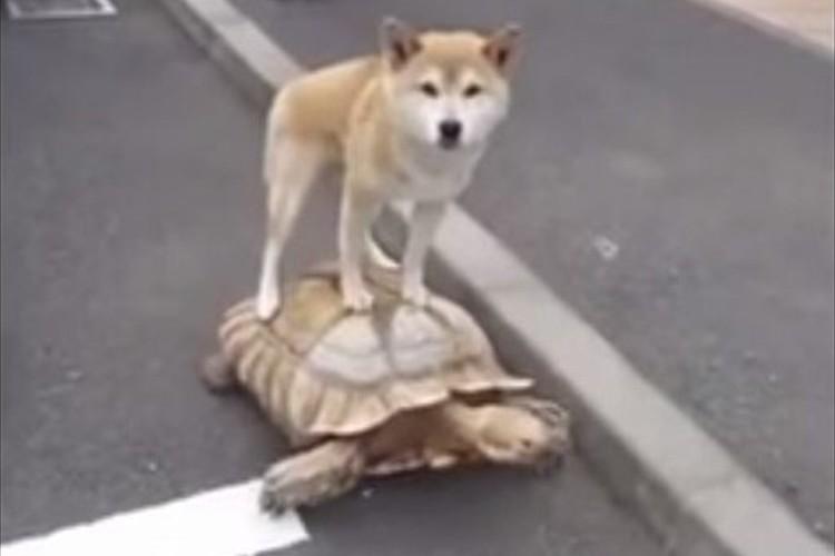 何かに乗っているノリノリな動物たちがかわいい8選(GIFアニメ)