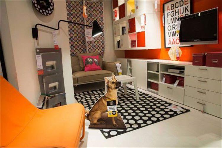 殺処分される犬の命を救ったIKEAのプロジェクトが素晴らしい成果をあげている