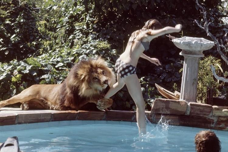 【驚愕】世にも奇妙なライオンと一緒に暮らす一家の写真が話題に