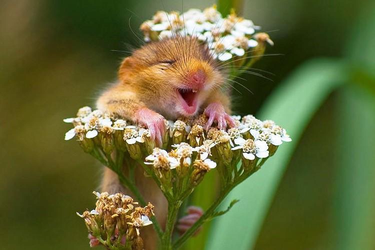 こんなにかわいいネズミは初めて!!様々な表情を見せる写真に癒される!