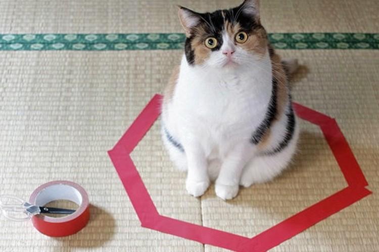 """テープさえがあれば猫がやってくる""""猫転送装置""""が海外でも話題に!"""