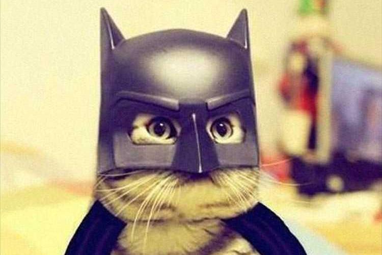 【ハロウィン】仮装で楽しむのは人間だけじゃない!コスプレしてみた動物たち