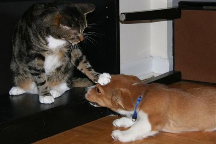 「ボクのほうが上だニャ~」犬と猫の力関係が一目で分かる画像24枚+1枚