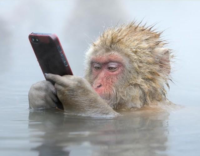 温泉でiPhoneをいじるニホンザルの写真がイギリスの写真コンテストで受賞