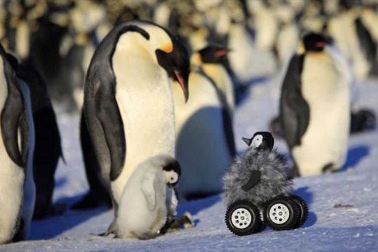 """皇帝ペンギンの赤ちゃんを間近で撮影するために作られた""""ペンギンロボット""""が可愛い"""