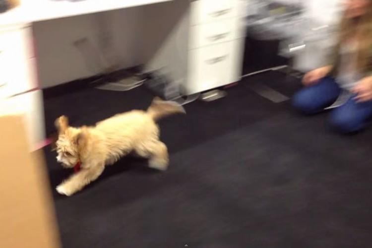 小さくなっちゃった!通り抜けると犬が小さくなる『縮小マシーン』を発明!?