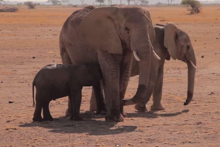 """【今日は何の日?】11月16日は""""ぞうさんの日""""子ゾウを救出した感動ドキュメントが素敵"""