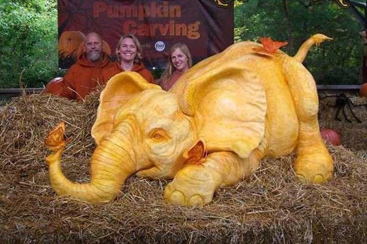 毎日96頭のアフリカゾウが殺されている事実。巨大カボチャを使ったゾウの彫刻パフォーマンスで