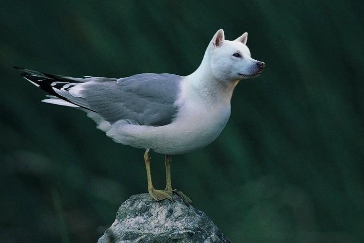 「犬 × 鳥」を掛けあわせたらこうなった?不思議な動物コラージュ画像がネットで盛り上がっている