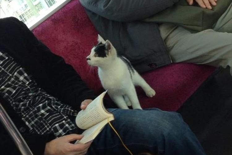 日曜日のお昼に電車に迷い込んできた一匹の猫。無事に飼い主の元に帰ってきたと報告あり