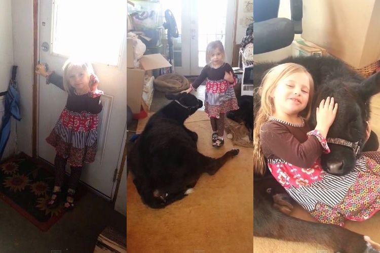 少女「ねぇ、牛を飼いたいんだけど...」部屋の中に普通に牛がくつろいでいてママもびっくり!