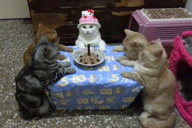 【動画】誕生日パーティをやらされてる感漂う5匹の猫。テーブルを囲む姿がシュール過ぎる