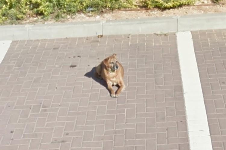 愛犬の生前の姿をGoogleストリートビューで偶然発見!飼い主さんはインターネットの優しさに感激