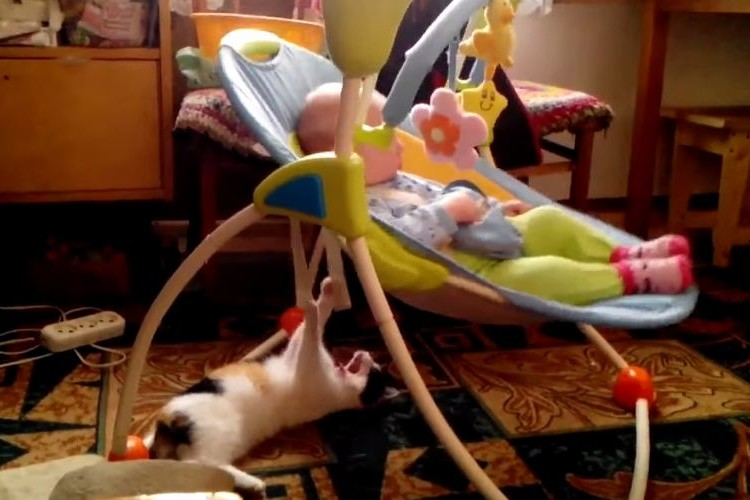 【動画】明らかに面倒くさそうに赤ちゃんの子守をする猫