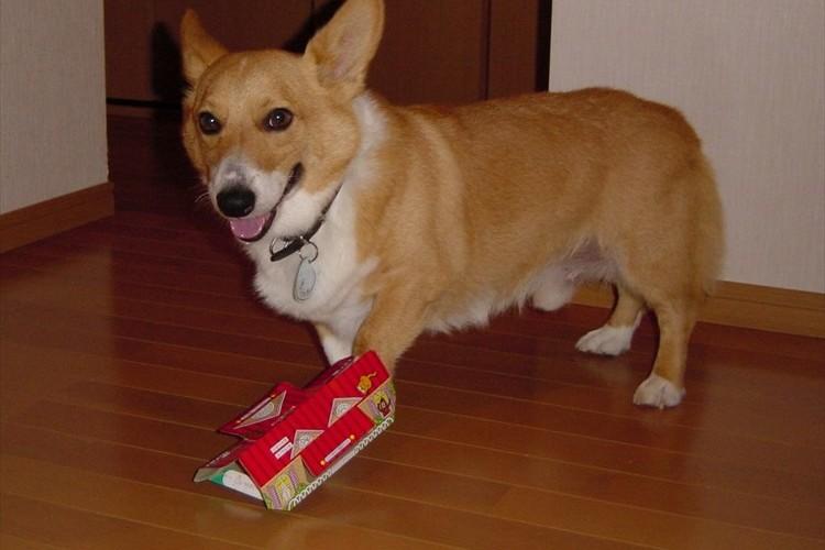 うちのワンコ面白いでしょ♪愛すべき犬GIFアニメ21選