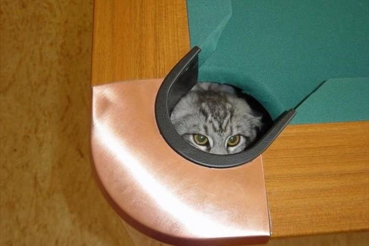 「あなたを影から見ています」ひとり忍者ごっこをする猫たち